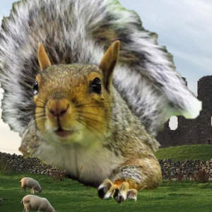 Igiant squirrel attacks brough castle